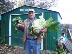 3.2 Kg cabbage, 7.5 Lb beetroot on undug ground grown with HH -4
